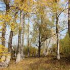 Золотая осень в Увате